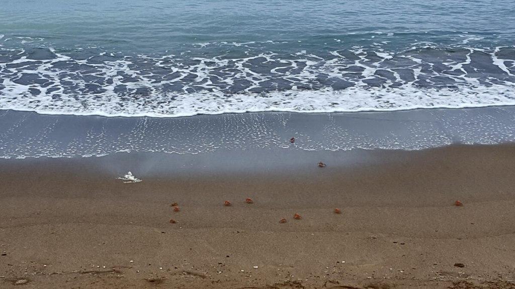 Krabbetjes op het strand van Isla de la Plata