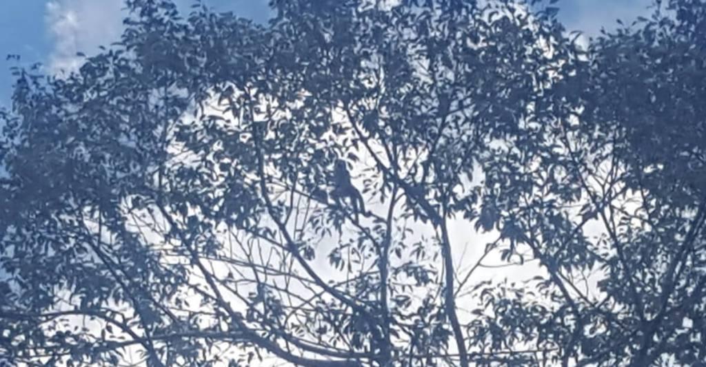 Spot het aapje in de Amazone