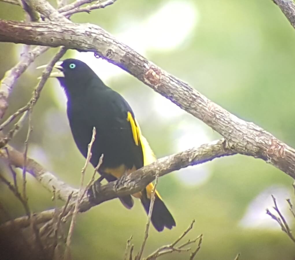 Vogels spotten in de Amazone